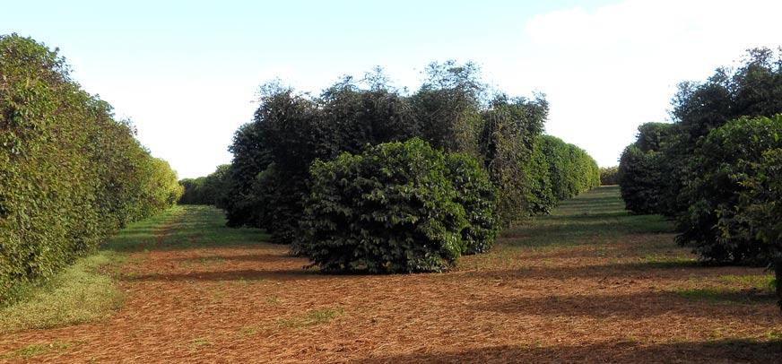 brasile-3