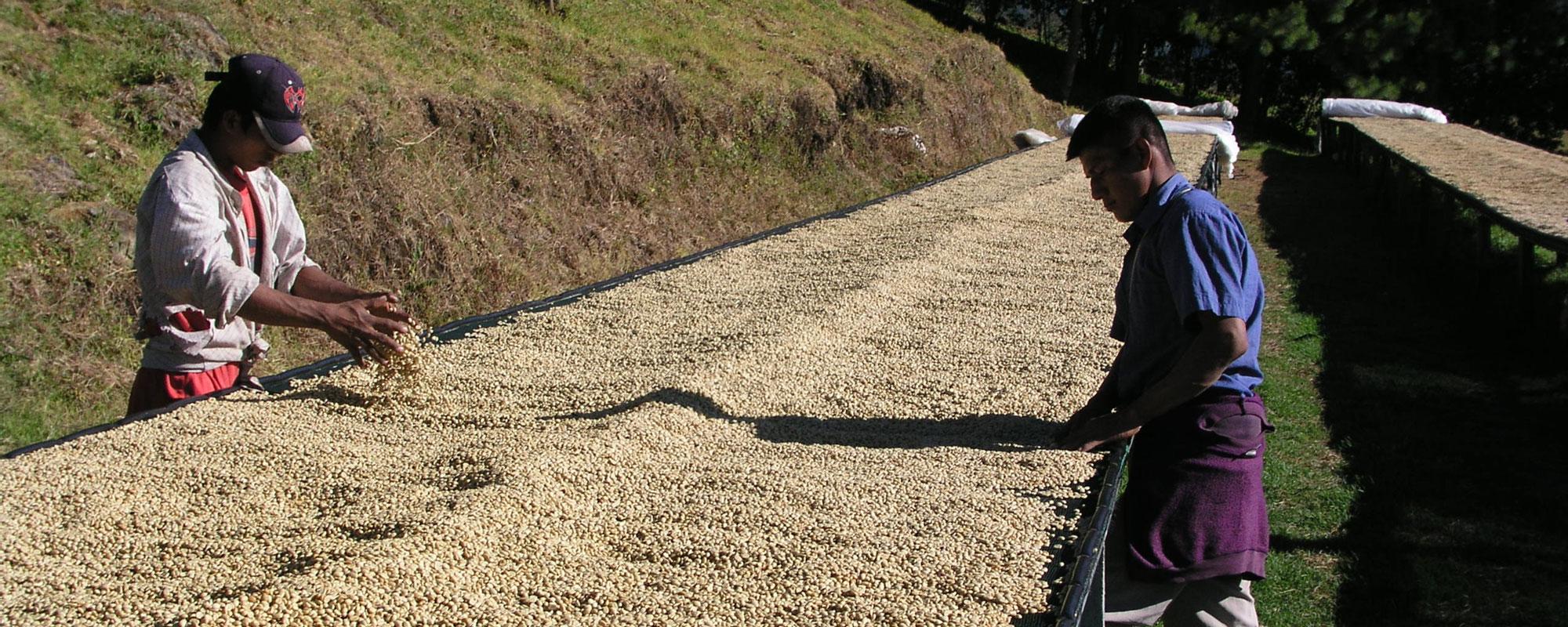 Panama 2009 - Caffé Lelli