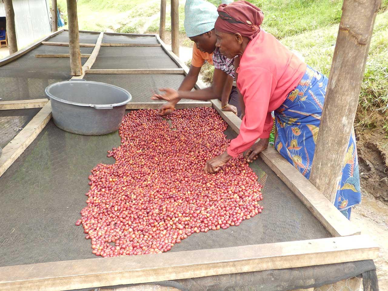 Rwanda 2016 - Caffè Lelli